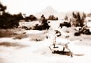 """The Black Desert"" Song  – OneSleepyboi – [Onesleepyboi]."